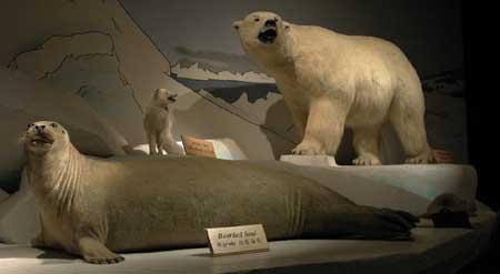 arctic fox habitat diorama